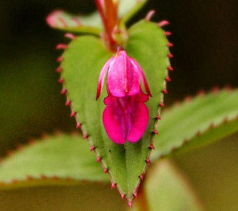 Rediscoveredplants